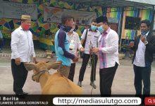 Penyerahan bantuan sapi guliran